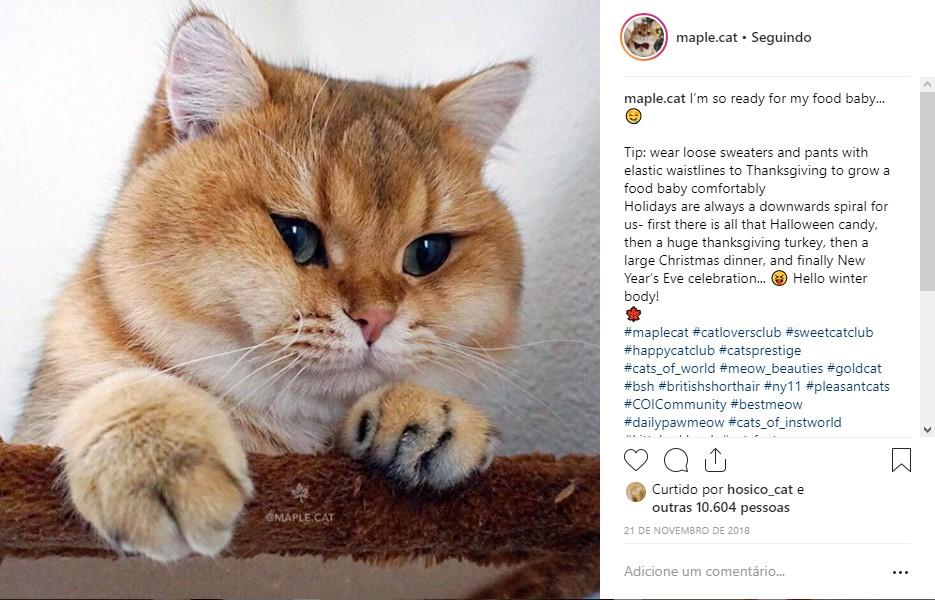 @maple.cat - Crédito: Reprodução da internet /33Giga/ND