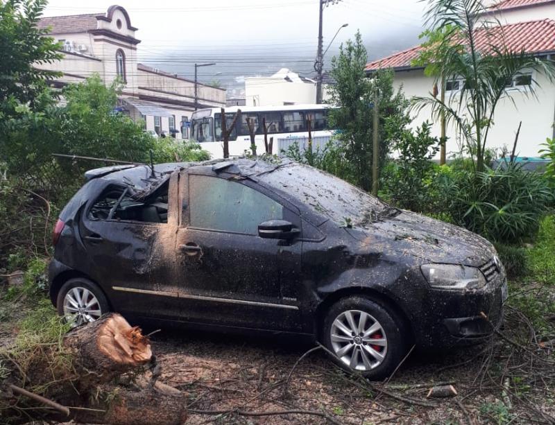 Queda de árvore danifica carro - Divulgação ND