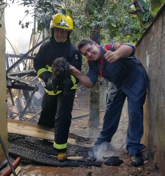 Cinco cachorros foram resgatados pelos bombeiros - Corpo de Bombeiros Militar de Itapoá/Divulgação/ND