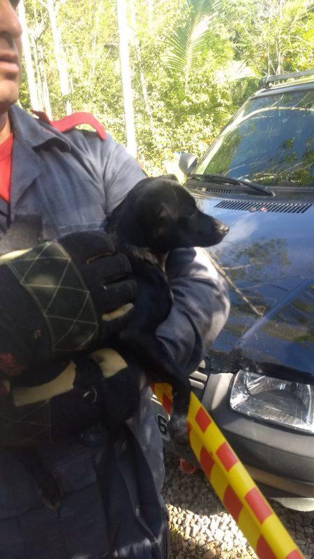Além da criança, os dois cães também sumiram do carro. Ainda não se sabe como isso aconteceu. - Corpo de Bombeiros/Divulgação