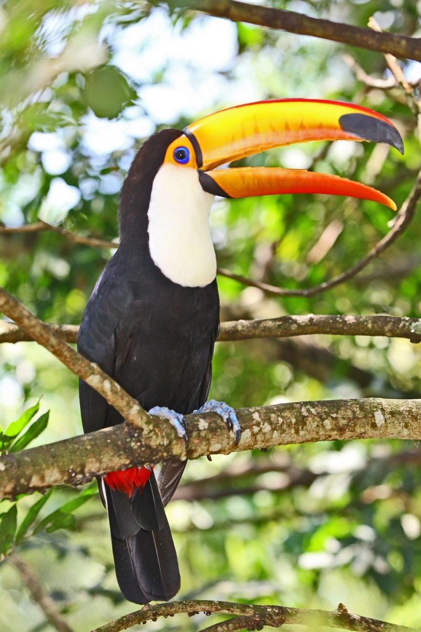 Diversas espécies podem ser vistas no zoológico do parque - Divulgação - Divulgação/Rota de Férias/ND