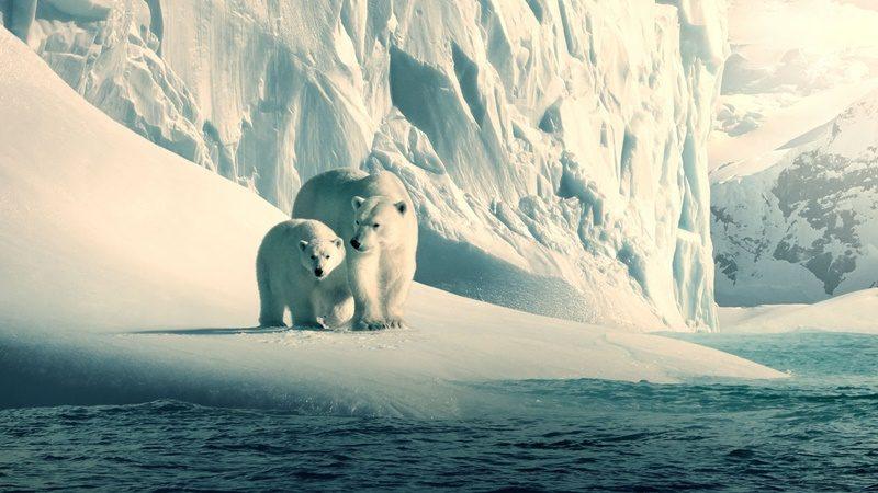 Nosso Planeta (2019) - Com imagens nunca vistas, o ambicioso documentário traz a beleza natural de nosso planeta e mostra como as mudanças climáticas têm impacto sobre todas as criaturas vivas. - Divulgação/33Giga/ND