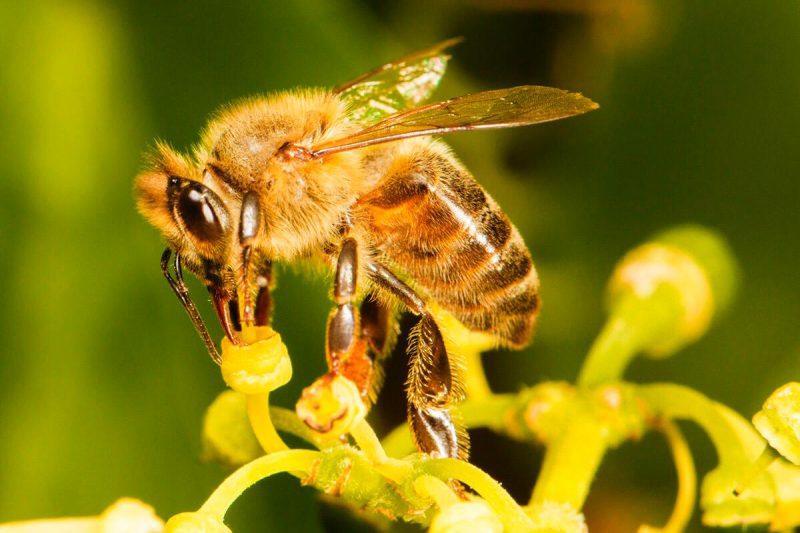 proteja as abelhas - 2