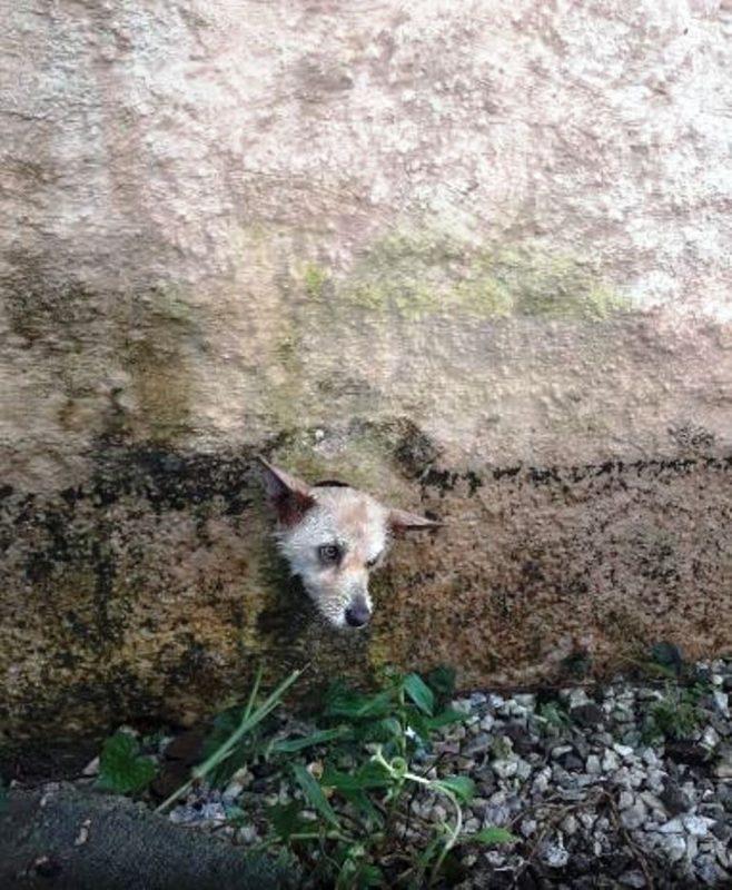 Cachorro ficou com a cabeça presa no muro de sua casa – cao preso bombeiros