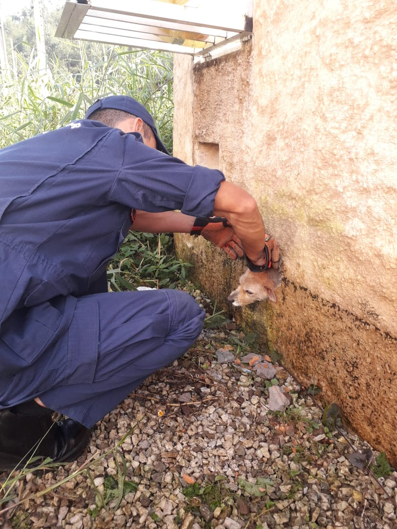 Para o resgate, os bombeiros precisaram quebrar parte do muro, trabalho que foi realizado em cerca de 20 minutos. - Corpo de Bombeiros/Divulgação