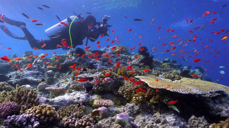 Em Busca dos Corais (2017) – Mergulhadores, cientistas e fotógrafos do mundo inteiro se unem em uma campanha submarina épica para documentar o desaparecimento dos recifes de coral. - Crédito: Divulgação/33Giga/ND