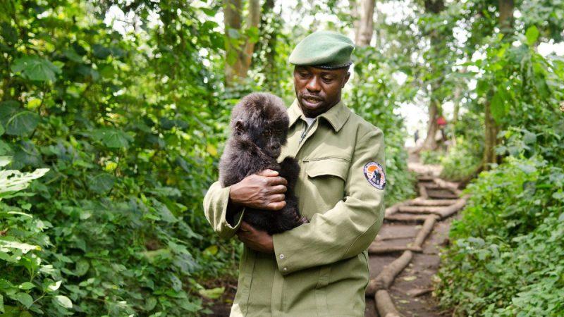 Virunga (2014) – Conheça a história verídica dos guardas que arriscam a vida para proteger o parque nacional mais precioso da África e seus gorilas em risco de extinção. Foi indicado ao Oscar. - Crédito: Divulgação/33Giga/ND