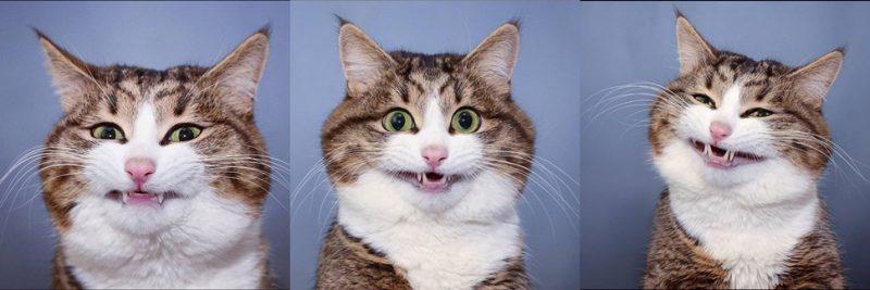 45 perfis de gatos famosos para seguir no Instagram - Reprodução/@rexiecat