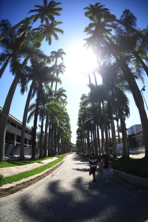 A Rua das Palmeiras é um dos principais pontos turísticos de Joinville e é um local muito agradável para um passeio romântico neste Dia dos Namorados. É também uma rua cercada de muita história. Ao fundo dela, é localizado o Museu Nacional de Imigração e Colonização. Trata-se de uma passeio imperdível em Joinville. - ND / Reprodução