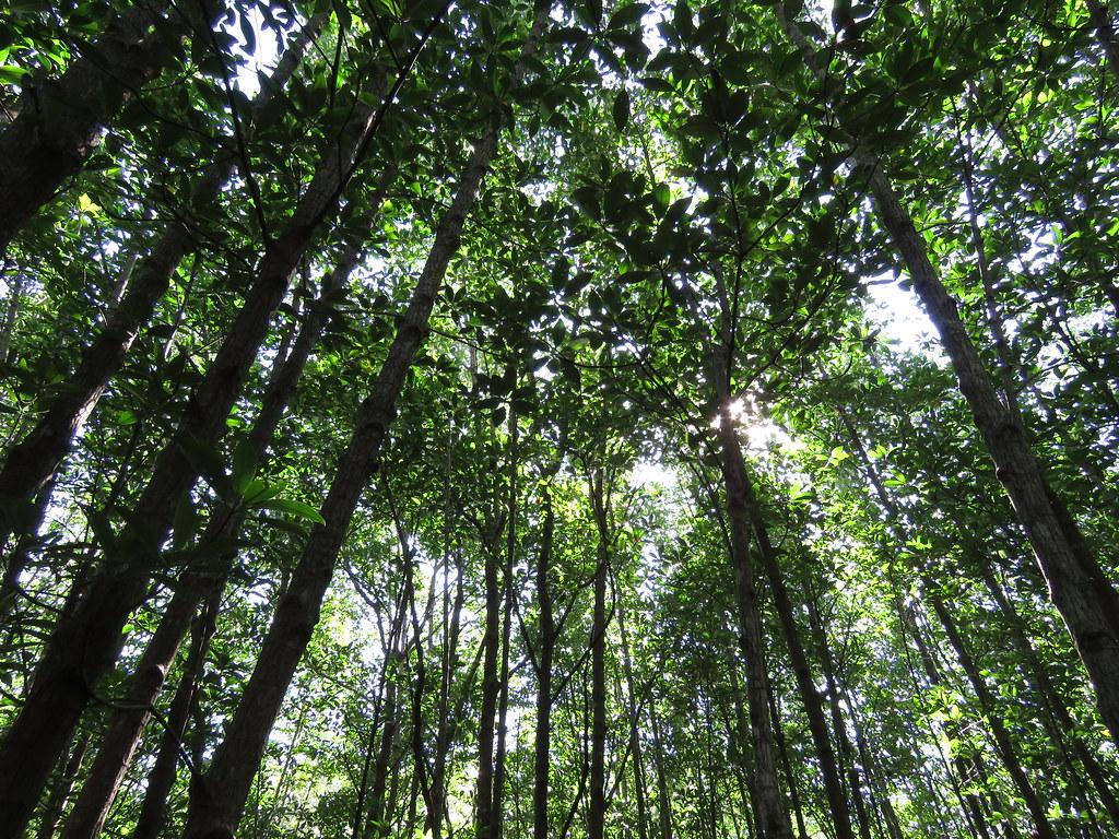 Conheças algumas das maiores florestas do mundo - - /Rota de Férias/ND