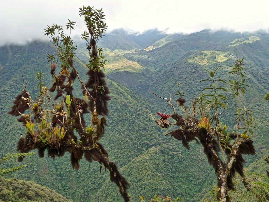 Ecuador Cloud Forest, Equador - Ecuador Megadiverso on Visual Hunt / CC BY-NC-SA - Ecuador Megadiverso on Visual Hunt / CC BY-NC-SA/Rota de Férias/ND