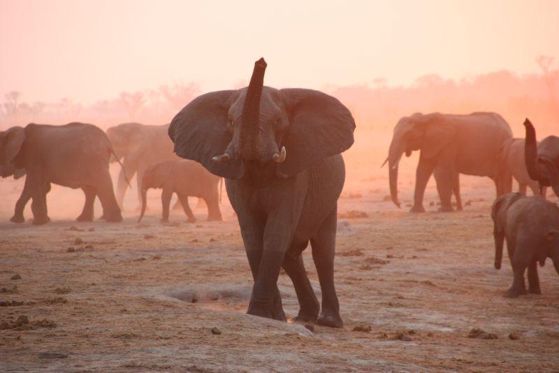 No Zimbábue, o Parque Nacional Hwange chama a atenção por abrigar o grupo de animais Big Five: leão, leopardo, elefante, rinoceronte e búfalo - travfotos via Visualhunt / CC BY-NC - travfotos via Visualhunt / CC BY-NC/Rota de Férias/ND