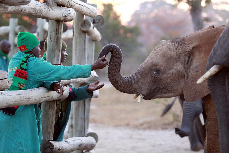 O Parque Nacional Kafue, na Zâmbia, tem 22.400 quilômetros quadrados e é o maior da África. Além dos animais selvagens, a observação de pássaros e a pesca são bastante procuradas - animalrescueblog via Visualhunt.com / CC BY-NC - animalrescueblog via Visualhunt.com / CC BY-NC/Rota de Férias/ND