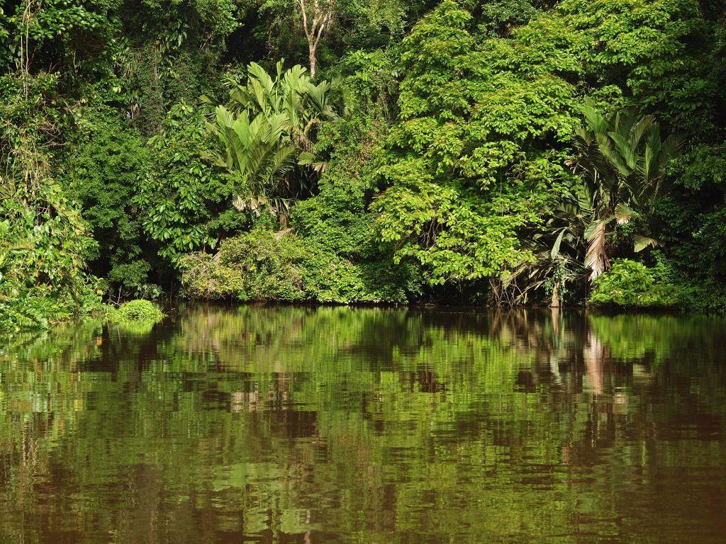 Tortuguero, Costa Rica - Pixabay - Pixabay /Rota de Férias/ND