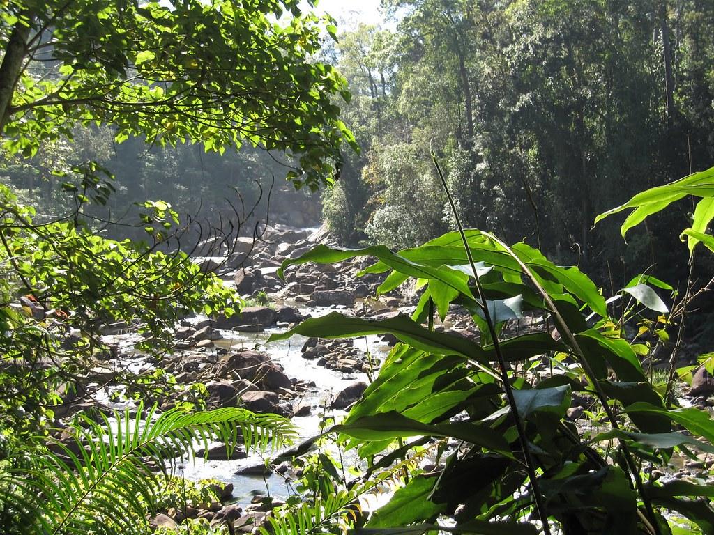 Reserva Florestal Sinharaja, Sri Lanka - rapidtravelchai on Visualhunt.com / CC BY - rapidtravelchai on Visualhunt.com / CC BY/Rota de Férias/ND