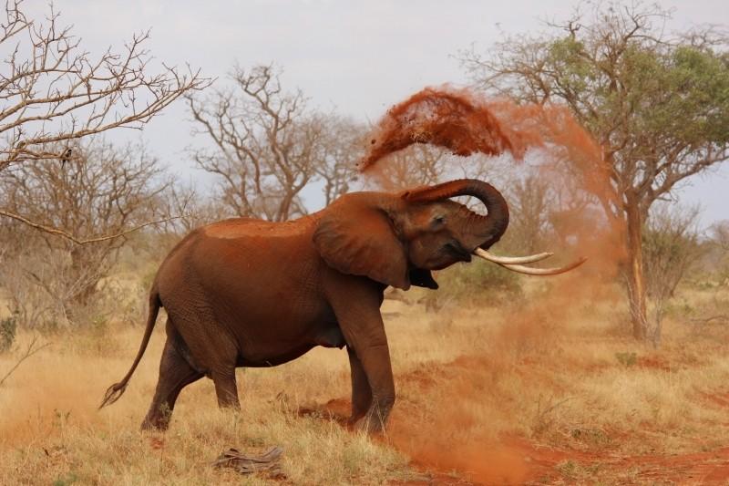 Com 22 mil quilômetros quadrados, os parques nacionais de Tsavo (Tsavo East National Park and Tsavo West National Park) fazem com que o complexo seja o maior do Quênia - Visualhunt - Visualhunt/Rota de Férias/ND