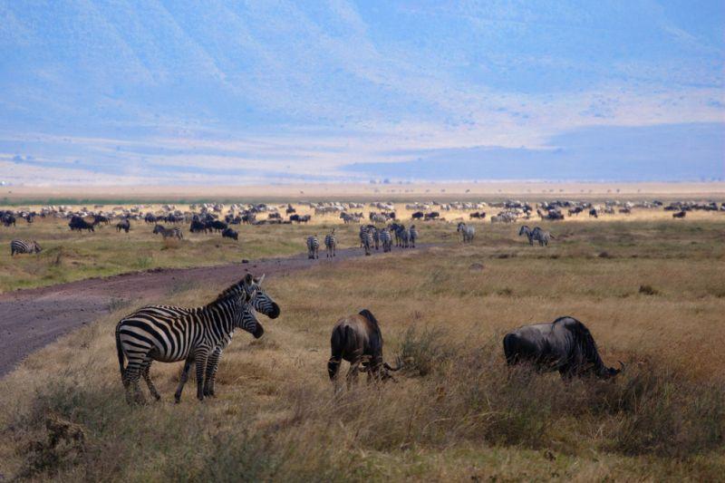 A região de Ngorongoro, também na Tanzânia, abriga um ecossistema com centenas de espécies de animais que vivem em uma grande cratera - mosilager via Visual hunt / CC BY-NC-SA - mosilager via Visual hunt / CC BY-NC-SA/Rota de Férias/ND