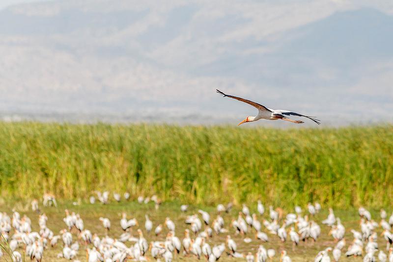 Além dos mamíferos selvagens, é fácil avistar aves de diferentes espécies no Parque Nacional de Arusha, na Tanzânia - Glen Darrud via Visualhunt / CC BY-NC - Glen Darrud via Visualhunt / CC BY-NC/Rota de Férias/ND