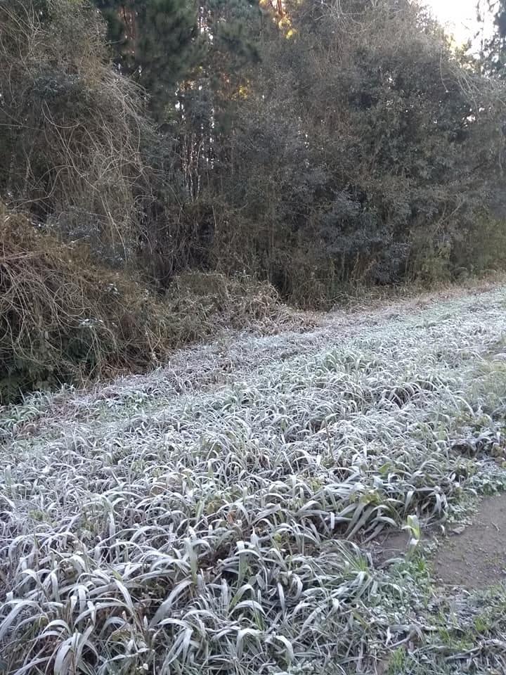 Em Canoinhas, os campos também amanheceram cobertos de gelo - Foto: Rosana Ritta