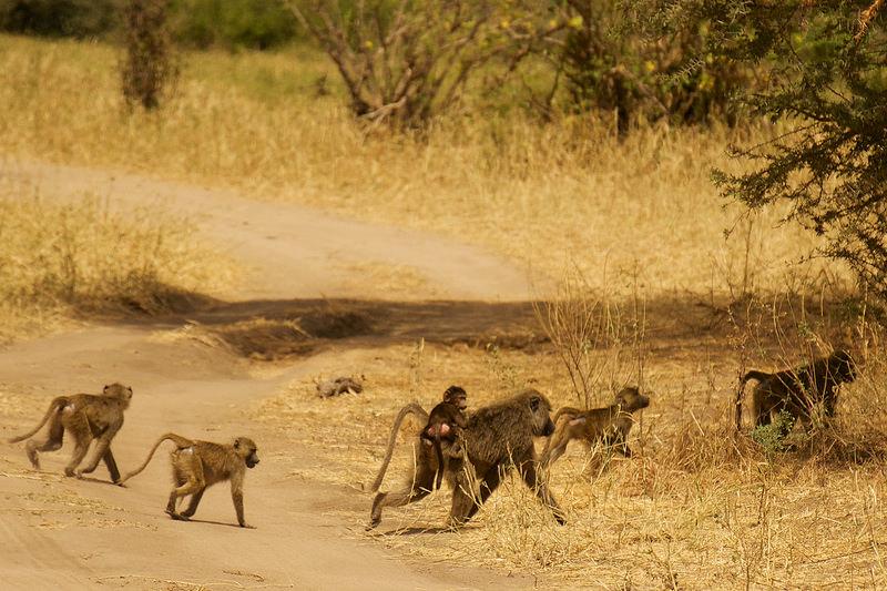 Localizado na África do Sul, o Parque Nacional Kruger é a maior referência do país quando o assunto é safari. Vale a pena ficar hospedado nas acomodações dentro da reserva - Ed Yourdon via VisualHunt / CC BY-NC-SA - Ed Yourdon via VisualHunt / CC BY-NC-SA/Rota de Férias/ND