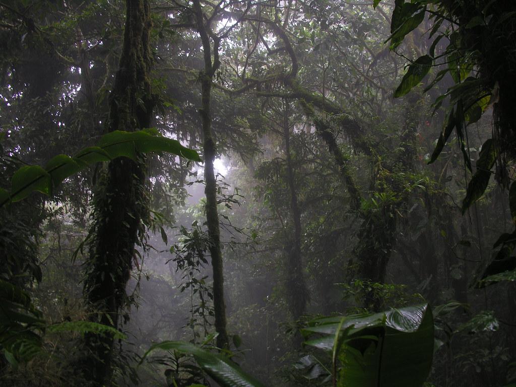 Floresta Nublada, Costa Rica - Squirmelia on Visual Hunt / CC BY-NC-SA - Squirmelia on Visual Hunt / CC BY-NC-SA/Rota de Férias/ND