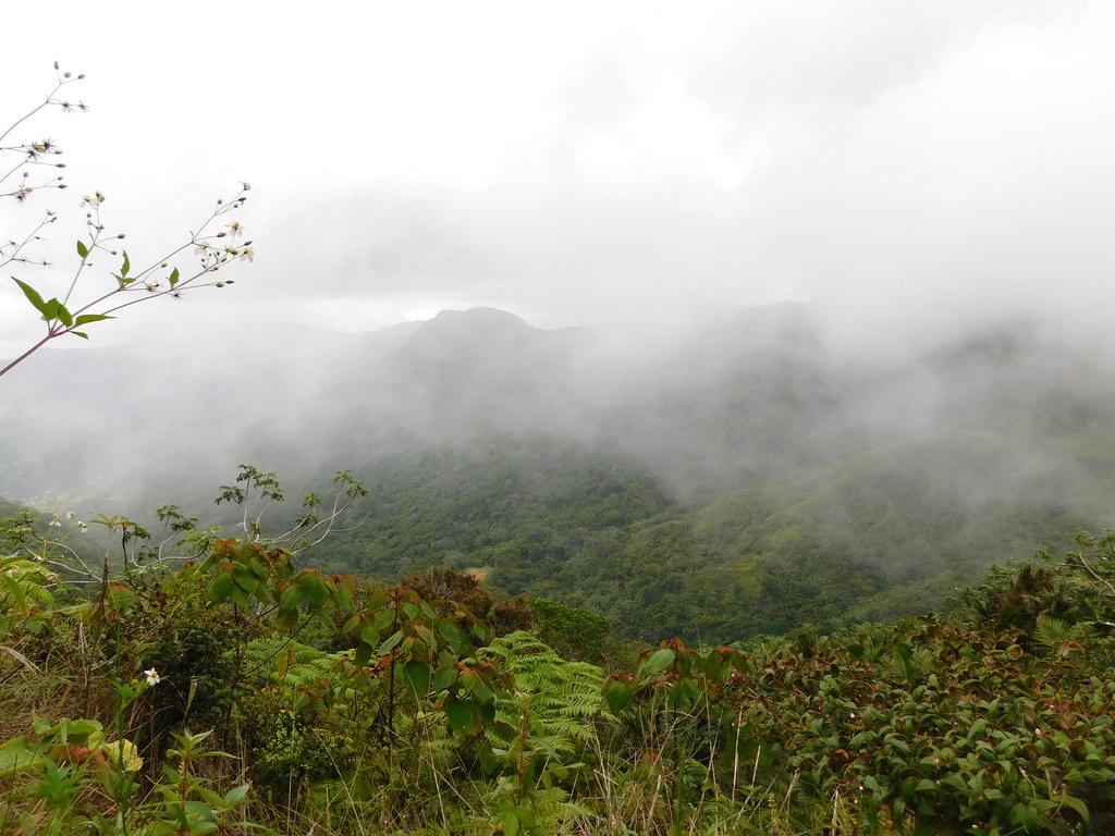 Floresta Nublada, Costa Rica - jimmywayne on VisualHunt / CC BY-NC-ND - jimmywayne on VisualHunt / CC BY-NC-ND/Rota de Férias/ND