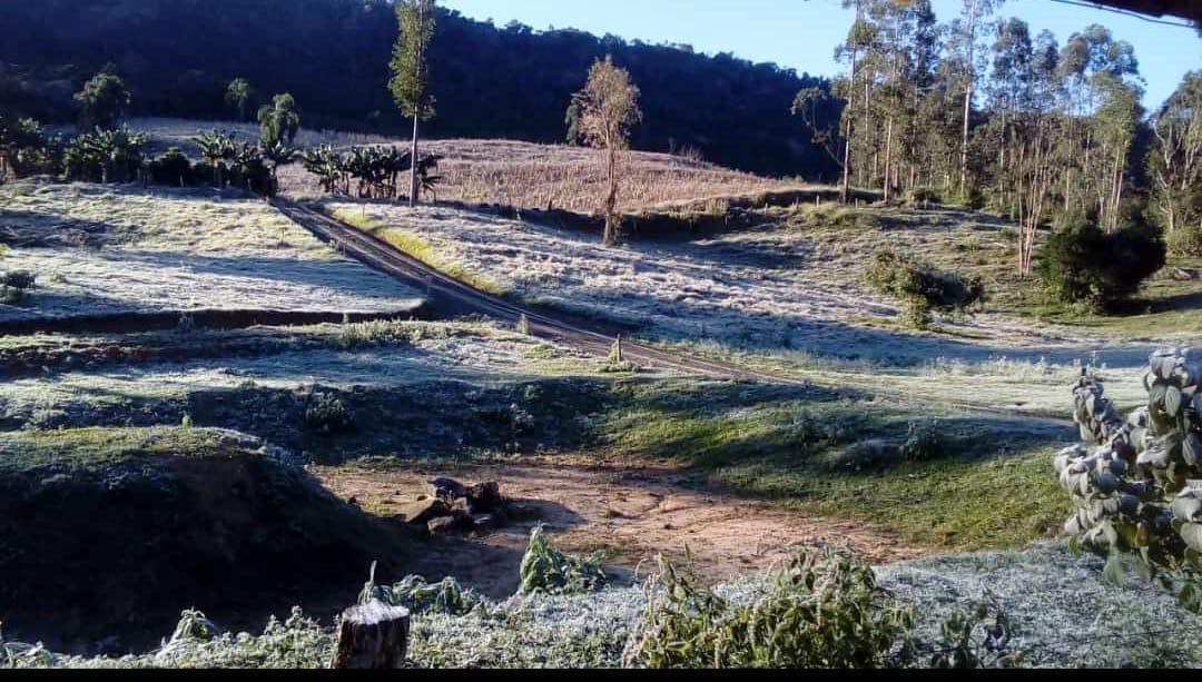 Os campos amanheceram cobertos de gelo nas cidades do Planalto Norte - Foto: Volnei Pereira