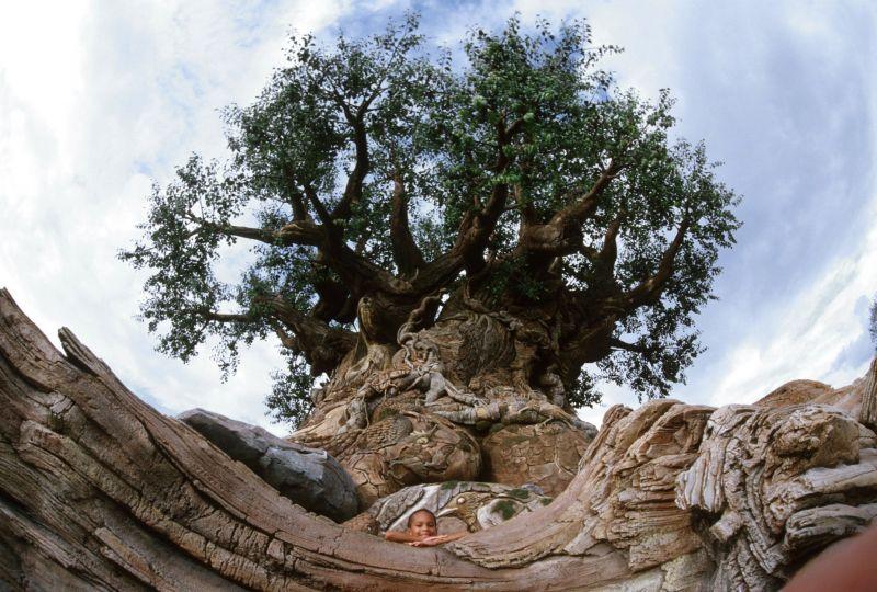 O caçula dos parques temáticos da Disney é o Animal Kingdom. Os visitantes não podem deixar de ir à montanha-russa Expedition Everest e ao safári Kilimanjaro. O símbolo do parque é a Árvore da Vida, com imagens de animais esculpidas no tronco - Divulgação - Divulgação/Rota de Férias/ND