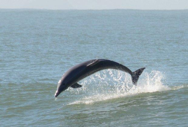 Plano de conservação pretende evitar as mortes dos animais e envolver a comunidade para a conservação da espécie – IMA/Divulgação/ND