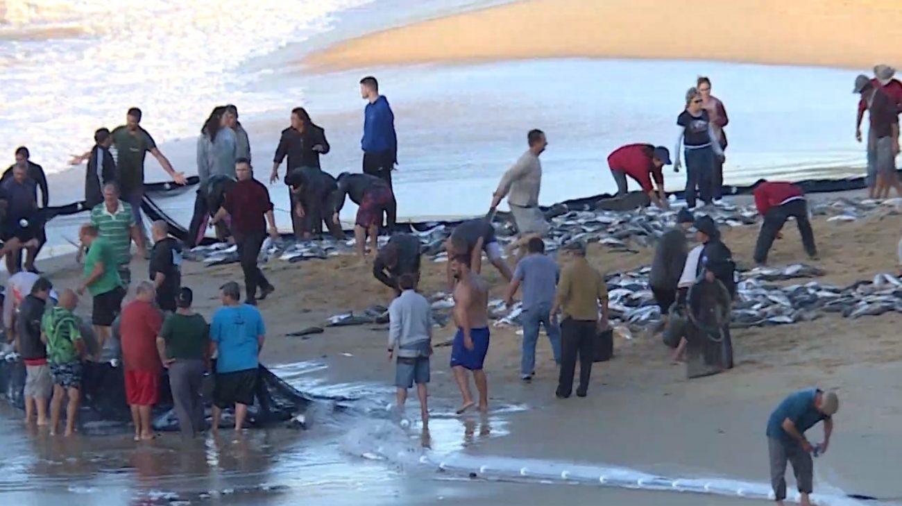 Quase 5 mil tainhas foram capturadas em um dia, no Estaleirinho - Elias Gotaski/RICTV