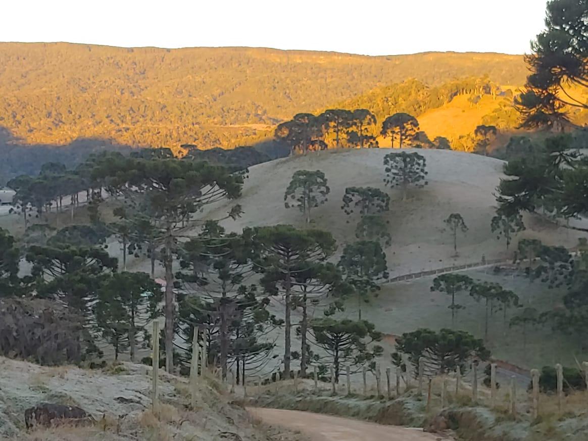 Geada em paisagem de Rancho Queimado - Reprodução/RICTV