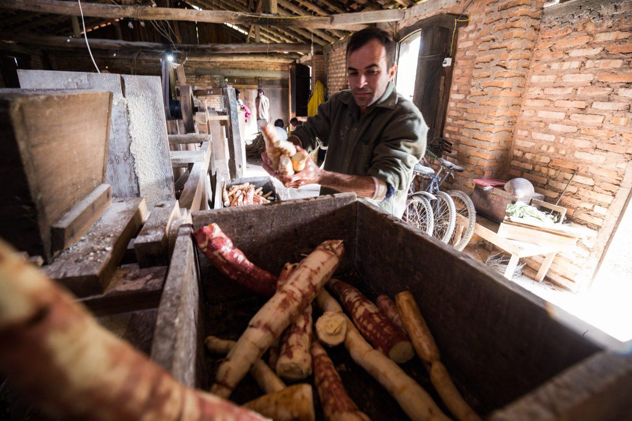 Mandioca lavada vai para o cevador onde será triturada e virará uma massa - Anderson/ND -