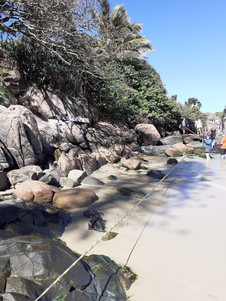 O local foi isolado para preservar a segurança do animal, porém, ele voltou para água e subiu novamente no costão em uma área de difícil acesso - Projeto de Monitoramento de Praias da Bacia de Santos