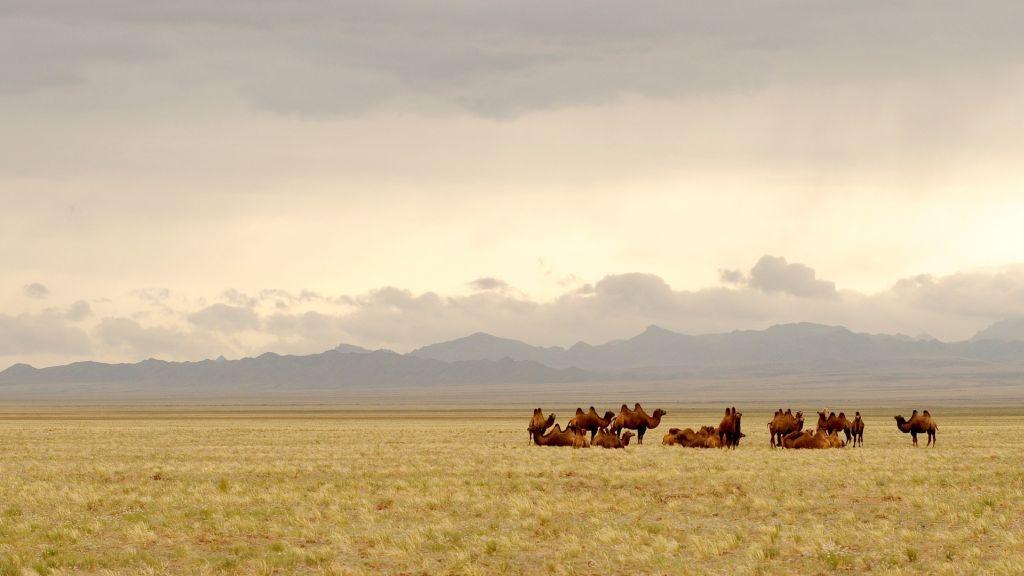 Mongólia - Pixabay - Pixabay /Rota de Férias/ND