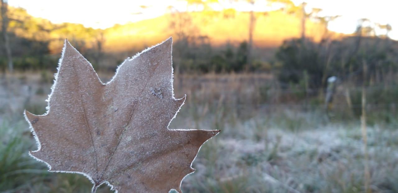 A folha de plátano, símbolo do outono e inverno, também ficou congelada com as baixas temperaturas registradas na madrugada. - Wagner Urbano/Divulgação/ND