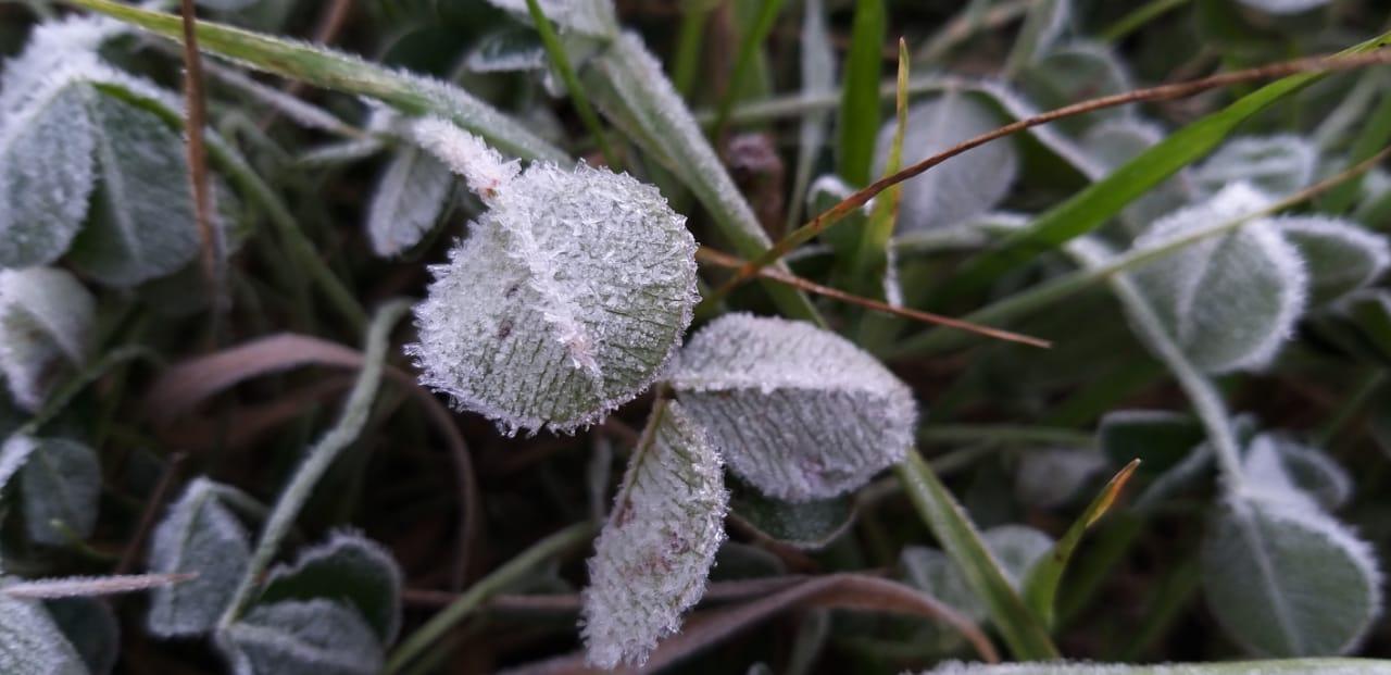A vegetação também amanheceu congelada nesta segunda-feira. A previsão é de que a temperatura não ultrapasse 14 graus durante o dia. - Wagner Urbano/Divulgação/ND