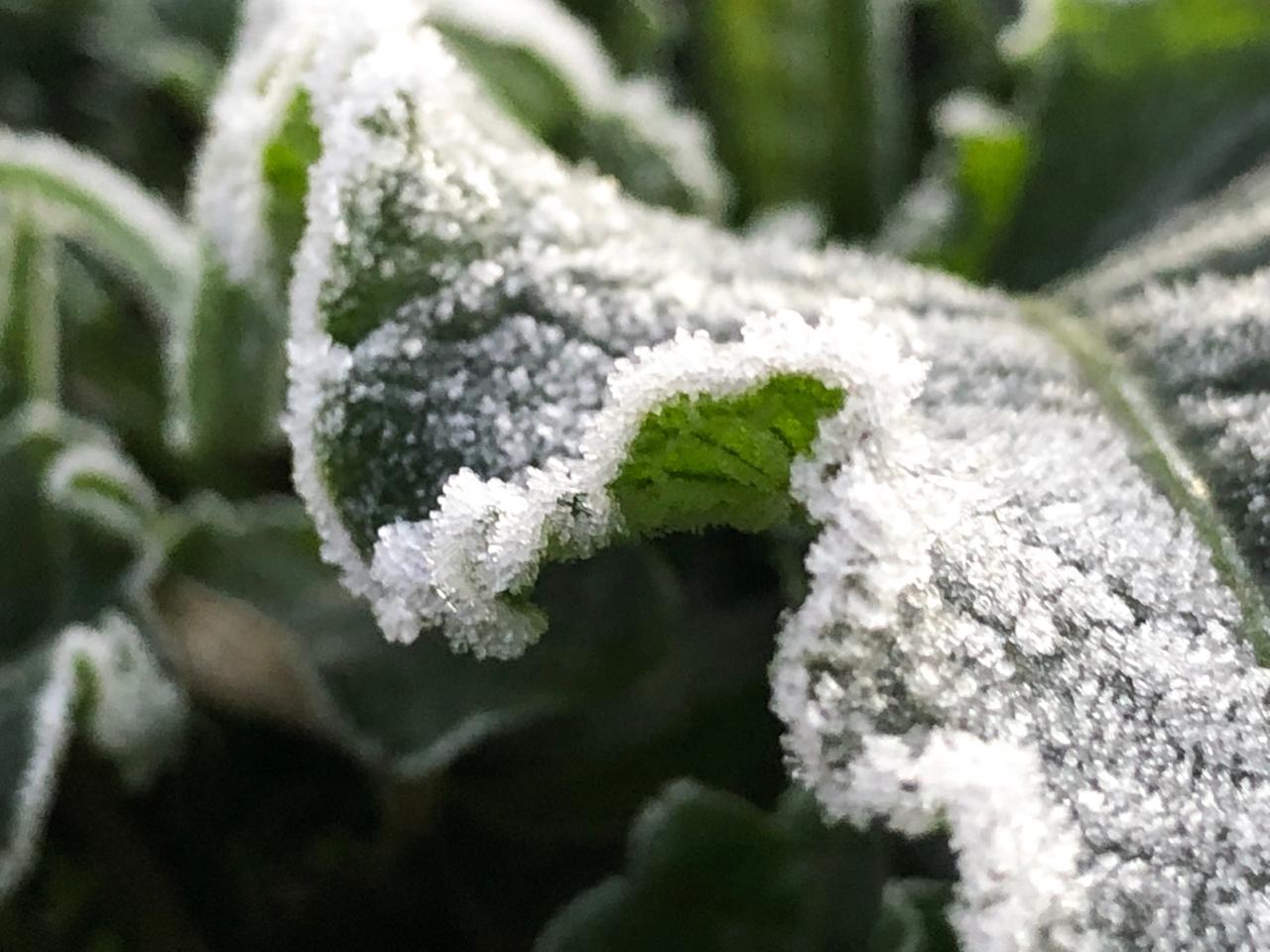 Gelo acumulou sobre as vegetações, mas logo se dissipou com a presença do sol - Willian Ricardo/ND