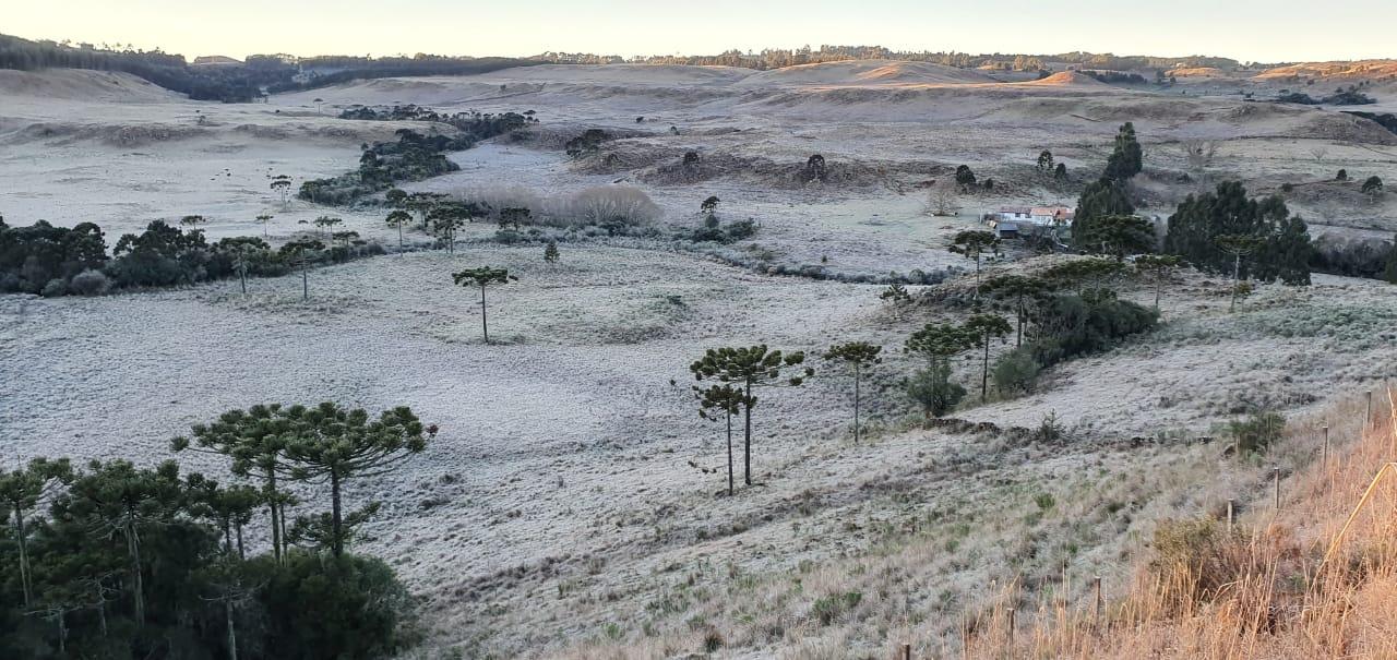 Os campos na serra catarinense são compostos largamente por araucárias - Mycchel Legnaghi/Reprodução ND