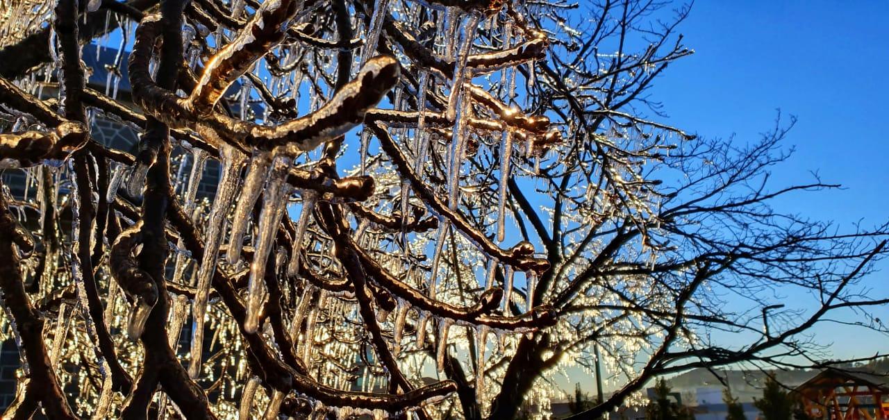 Plantas até congelaram na cidade serrana - Mycchel Legnaghi/Reprodução ND