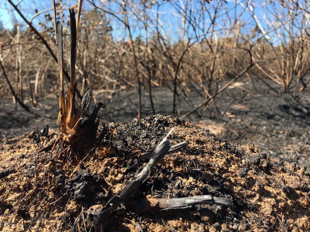Em alguns locais do Parque, o fogo acabou destruindo completamente a vegetação - Eduardo Cristófoli/RICTV/ND