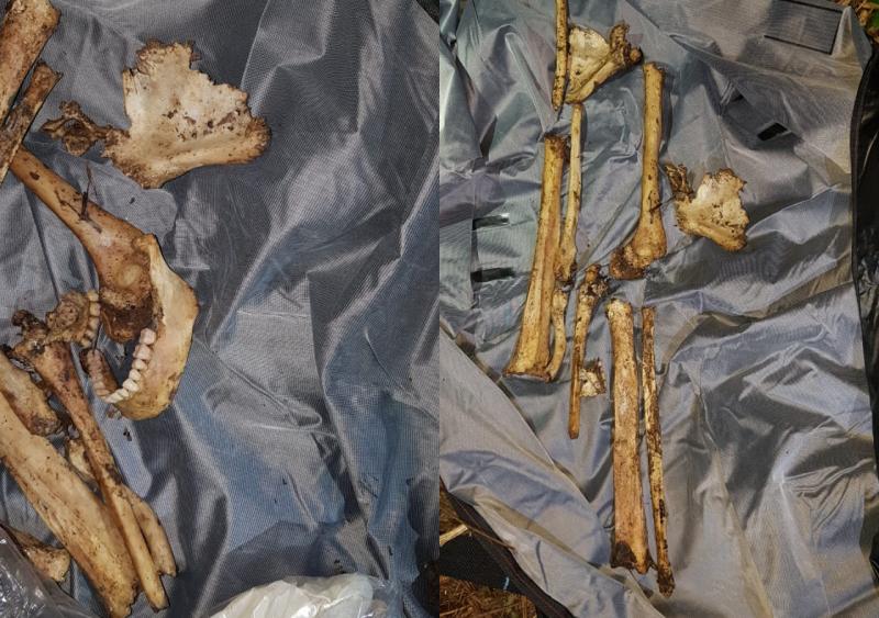 Ossos encontrados na noite de quinta-feira – DIC/Divulgação/ND
