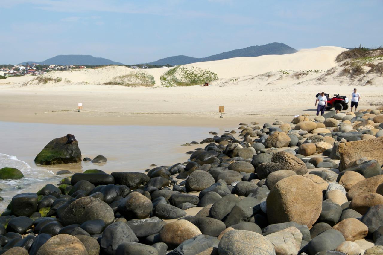 Lobo-marinho estava descansando nas pedras - R3 Animal/Divulgação
