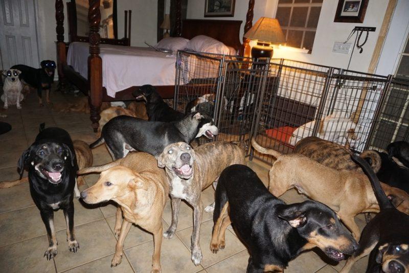 Chella mantém 79 cães em seu quarto durante a passagem do furacão Dorian – Facebook/Divulgação/ND