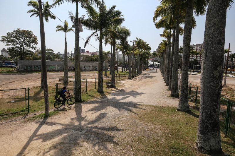 Palmeiras foram plantadas seguindo o projeto de Burle Marx. Foto: Anderson Coelho/ND
