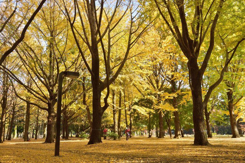 Além de ser lindo, o Parque Yoyogi fica na mesma área que recebeu a Vila Olímpica durante as Olimpíadas de Tóquio, em 1964 - © TCVB - © TCVB/Rota de Férias/ND