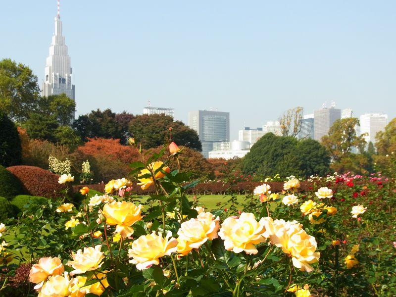 Vale a pena fazer uma caminhada e relaxar nos jardins do Shinjuku Gyoen National Garden - © TCVB - © TCVB/Rota de Férias/ND