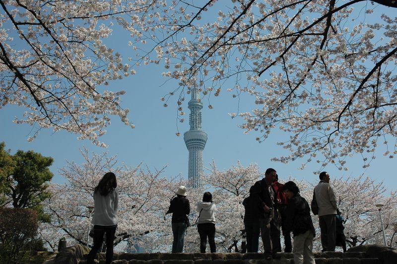 A Sky Tree é a torre mais alta da cidade. O visitante pode subir em vários andares, sendo que o mais alto está a 634 metros do chão - © TCVB - © TCVB/Rota de Férias/ND