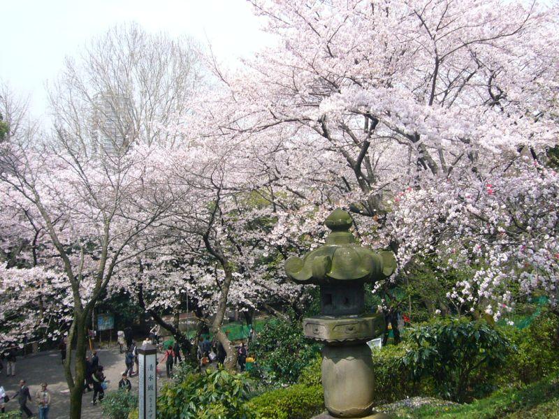 É impossível não se encantar com as cerejeiras e a naturexa exuberante do Ueno Park - © TCVB - © TCVB/Rota de Férias/ND