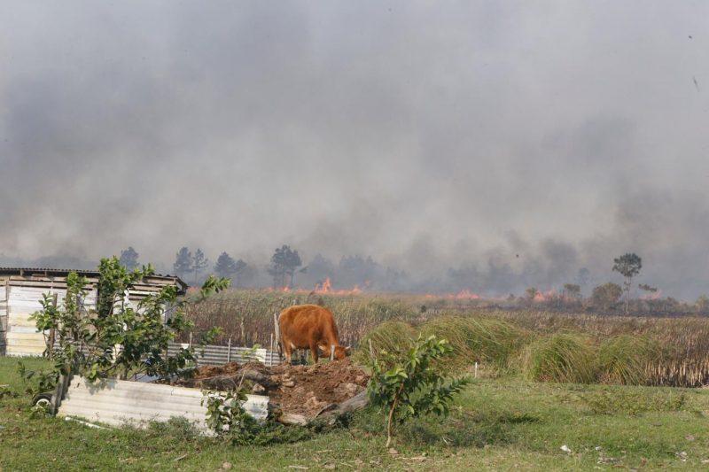 Na mesma residência onde o cão foi avistado pela reportagem, também havia uma vaca em uma área próxima ao fogo – Flávio Tin/ND