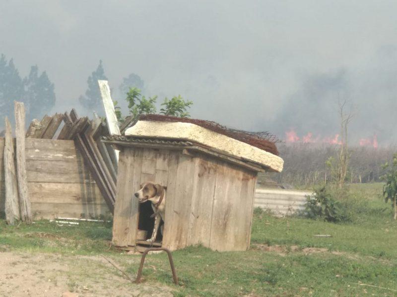 Um cachorro foi visto preso por uma corrente numa casa próxima a área do incêndio - Marcela Ximenes/ND